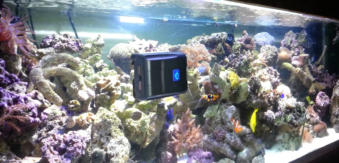 Aquarium Reiniger